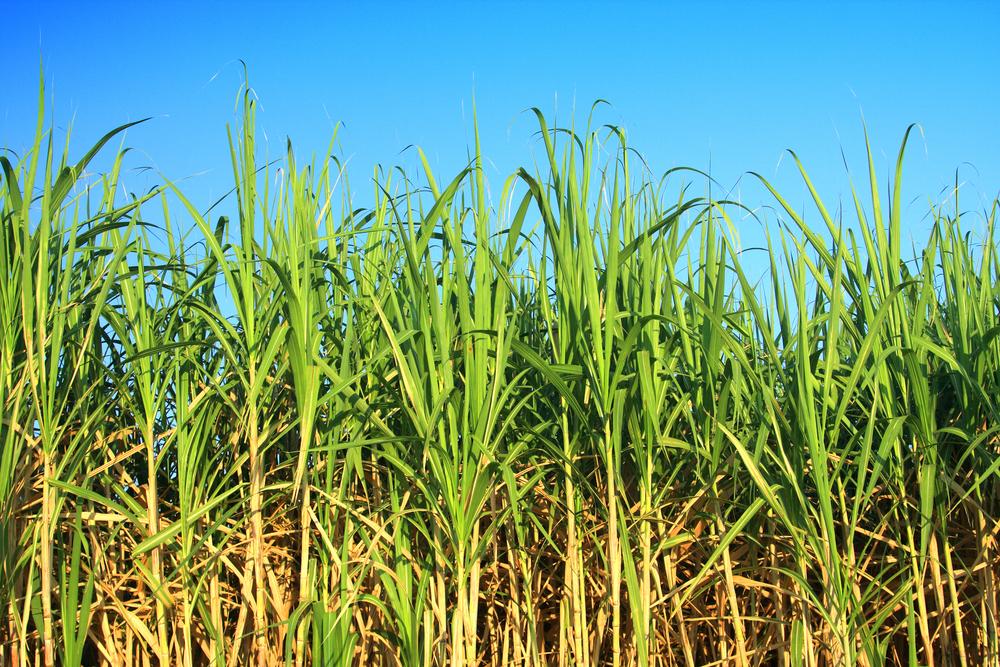 Сырьё для биотоплива