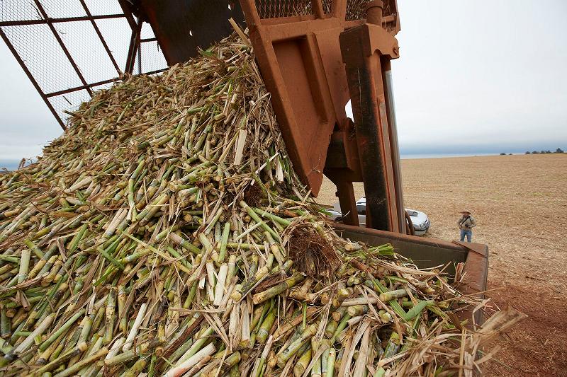 Отходы сахарного тростника